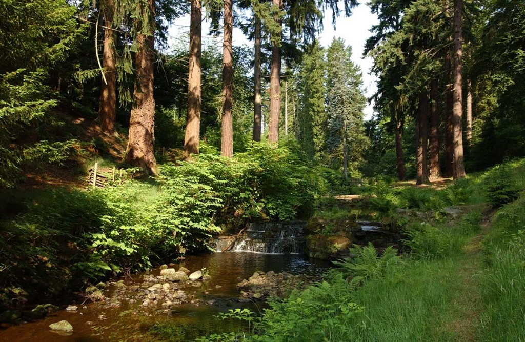 Forestry Management Consultancy